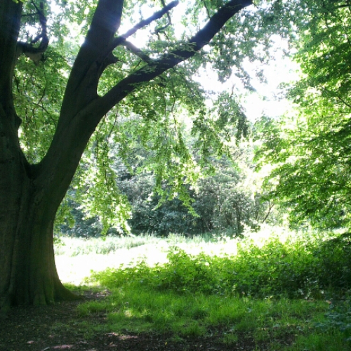 Notes From Another Land / Hampstead Heath
