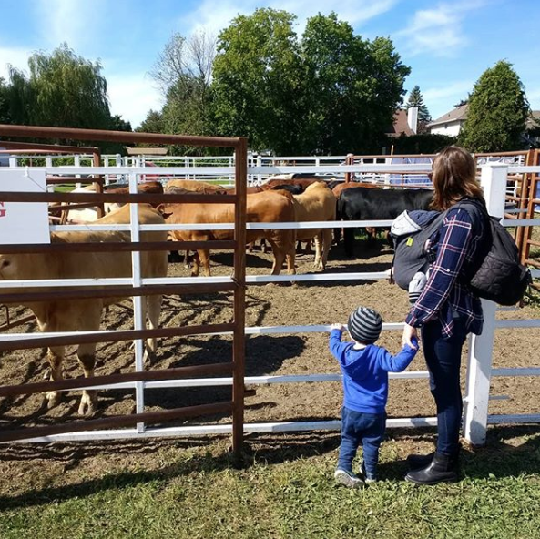 Amy Maureen Lynch cow spotting with her kids